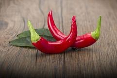 Röd Chilipeppar Fotografering för Bildbyråer