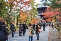 Röd höstnedgång för japansk lönn momijiträd i kyoto Japan Arkivbilder