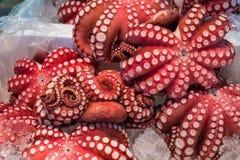 Röd levande bläckfisk på den Tsukiji fiskmarknaden, Tokyo, Japan Royaltyfri Fotografi
