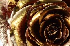 Röd ros som täckas med guld- målarfärg Arkivbild