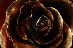 Röd ros som täckas med guld- målarfärg Arkivfoto