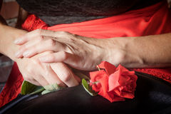 Röd rosblomma i kvinnliga händer Fotografering för Bildbyråer