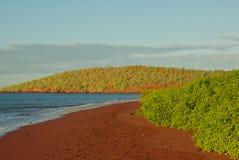 Röd sandstrand på den Rabida ön Royaltyfri Bild