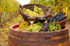 röd vit wine Royaltyfria Bilder