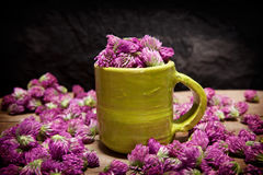 Röd växt av släktet Trifolium för te, Trifoliumpratense Fotografering för Bildbyråer