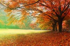 Röda bladsäsonger Fotografering för Bildbyråer