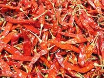 röda chilir Arkivbild