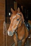 Röda hästkostnader i ett stall Royaltyfria Foton