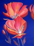röda ljusa vallmor för oljemålning Royaltyfria Foton
