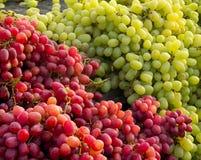 Röda och vita druvor Fotografering för Bildbyråer