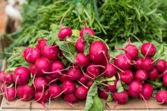 röda organiska rädisor Royaltyfria Bilder