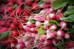 Röda, rosa och vita rädisor Royaltyfria Bilder