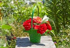 Röda rosor i en grön korg Det finns en suddig trädgård i Arkivfoto
