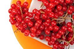 Röda saftiga mogna viburnumbär ligger på ett vitt tefat på apelsinrundaplattan Arkivbilder