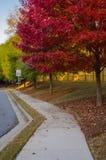 Röda sidor på träd i förorts- grannskap Arkivfoto