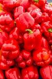 Röda söta spansk peppar Fotografering för Bildbyråer