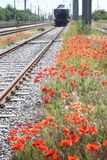 Röda vallmo längs järnvägspår Royaltyfria Bilder