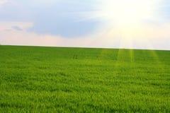 śródpolna zieleń Obraz Royalty Free