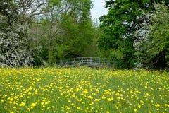 śródpolni łąkowi sceny wiosna drzewa Obrazy Stock