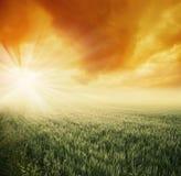 śródpolny słońce Zdjęcia Royalty Free