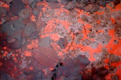 Rdza i moczy liście w wodzie Fotografia Stock