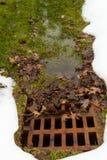 Rdzewiejąca drenaż kratownica zatykająca z liśćmi Fotografia Royalty Free