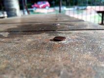 Rdzewiejący gwóźdź na drewnianym stole Zdjęcia Royalty Free