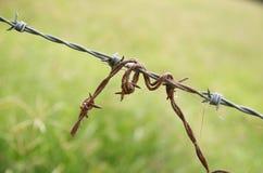 Rdzewiejący drut kolczasty Zdjęcia Stock