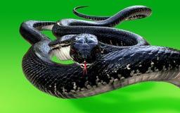 Re Cobra Black Snake il serpente velenoso più lungo del ` s del mondo su fondo verde Immagine Stock