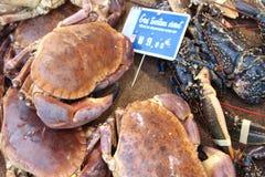 Re Crabs dalla Normandia Fotografie Stock Libere da Diritti