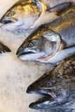 Re d'Alasca Salmon Fish sul mercato dei pescivendoli del ghiaccio Fotografie Stock Libere da Diritti