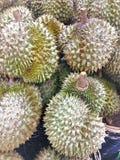 Re dei frutti, frutta dei durians su fondo immagine stock