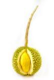 Re dei frutti, gambo lungo del durian, su fondo bianco fotografie stock