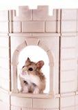 Re del castello Immagine Stock Libera da Diritti
