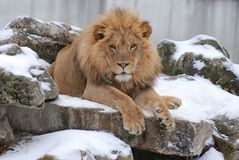 Re della collina Fotografia Stock