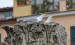 Re gulls il nido immagine stock libera da diritti