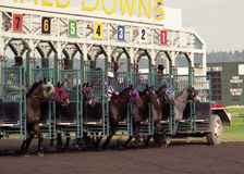 They're Off. Thoroughbreds breaking from starting gate stock image