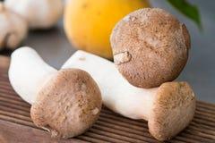 Re Oyster Mushroom fotografie stock