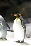 Re Penguin immagini stock libere da diritti