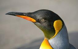Re Penguin 7 immagini stock libere da diritti