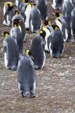 Re Penguin immagini stock