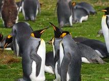 Re Penguins Fotografia Stock