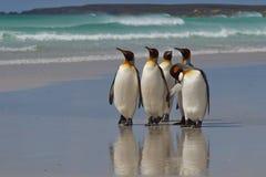 Re Penguins - isole Falkalnd fotografie stock libere da diritti