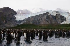 Re Penguins sul porto dell'oro Fotografia Stock Libera da Diritti