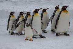 Re Penguins sulla parata Immagini Stock Libere da Diritti