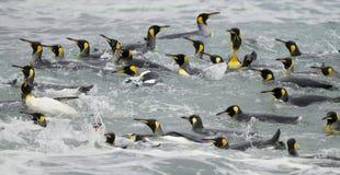 Re Penguins Swimming nelle onde fotografie stock