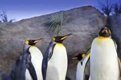 Re pinguini Fotografia Stock