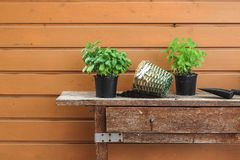 Re-potting herbs on an old garden table in spring stock image