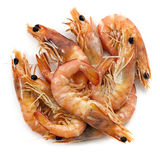 Re Prawns fotografia stock