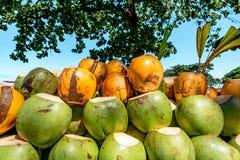 Re verde e giallo Coconut Background immagine stock